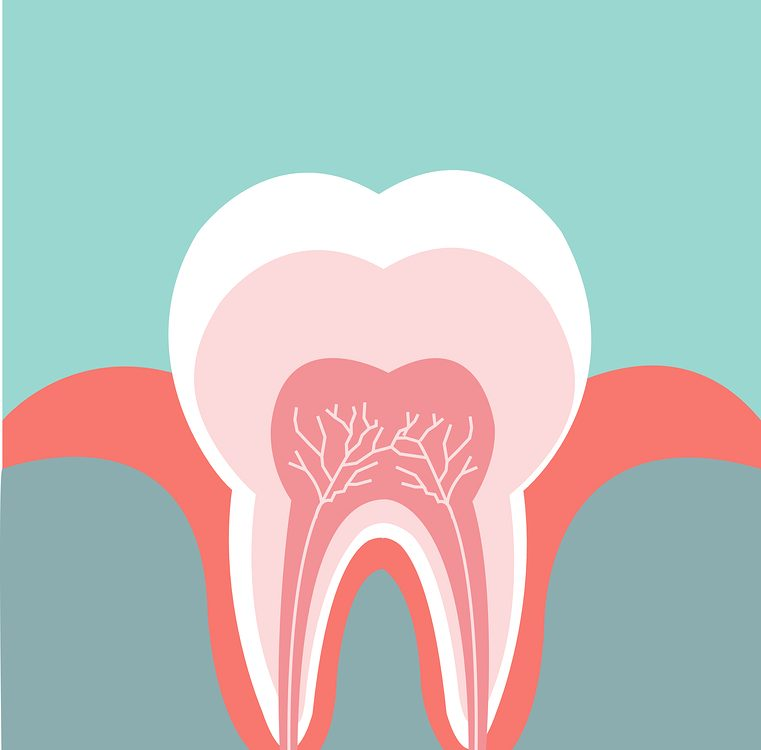 root-canal,عصبکشی دندان,درمان پالپکتومی,توصیههای کلیدی پس از عصب کشی دندان