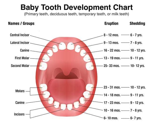 دندان های شیری و دائمی,baby teeth کودکان